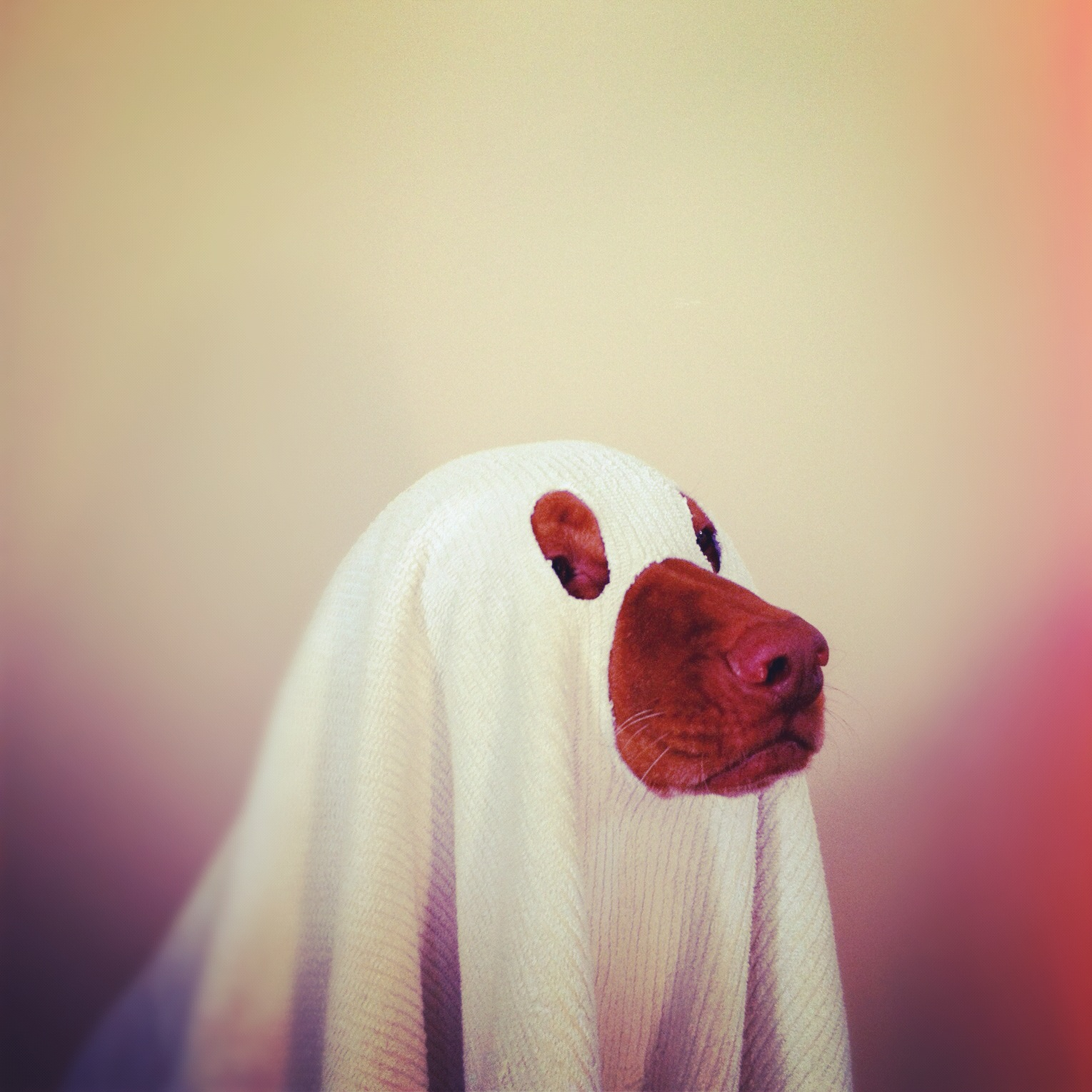 How To Make A Ghost Costume For Your Dog